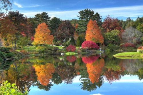Reflection of fall foliage at Asticou Azalea Garden near Bar Harbor Maine