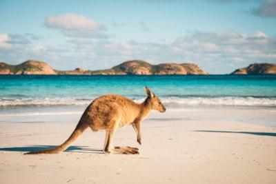Region Australien / Neuseeland