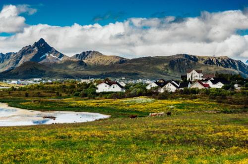 Field in bloom near cabins of Leknes city, Norway