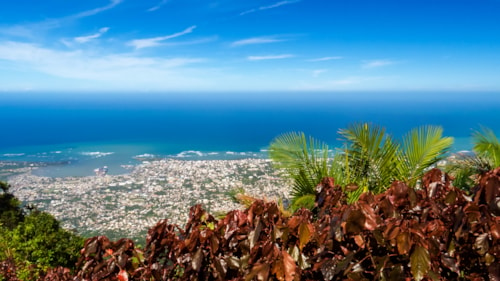 Many tropical leaves with Puerto Plata and the Atlantic Ocean in the background during a sunny day on top of Mount Isabel de Torres